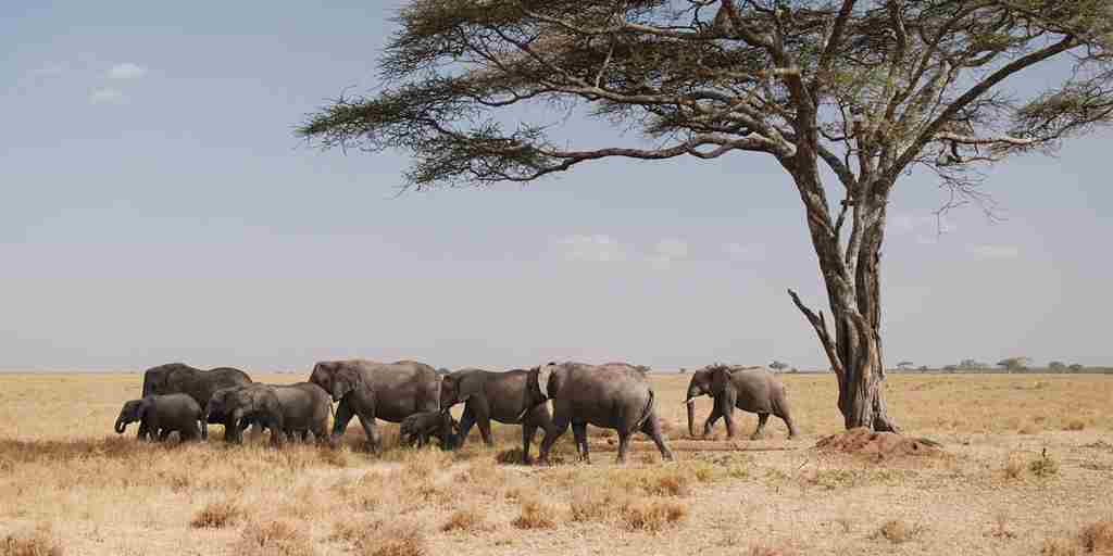herding-elephants-homepage-yellow-zebra-safaris.jpg