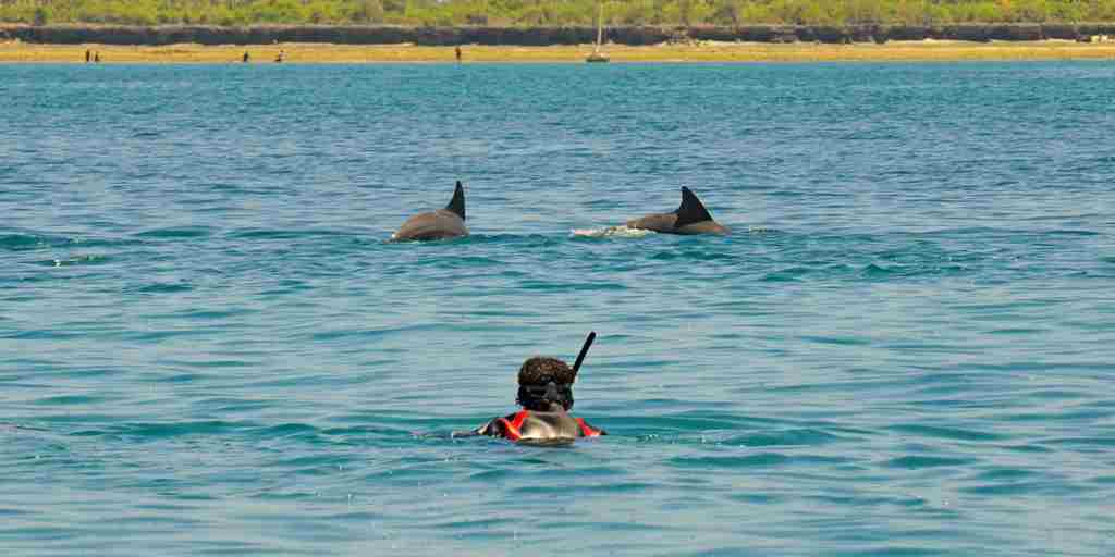 5 Activities - Swimming with dolphins 1.jpg