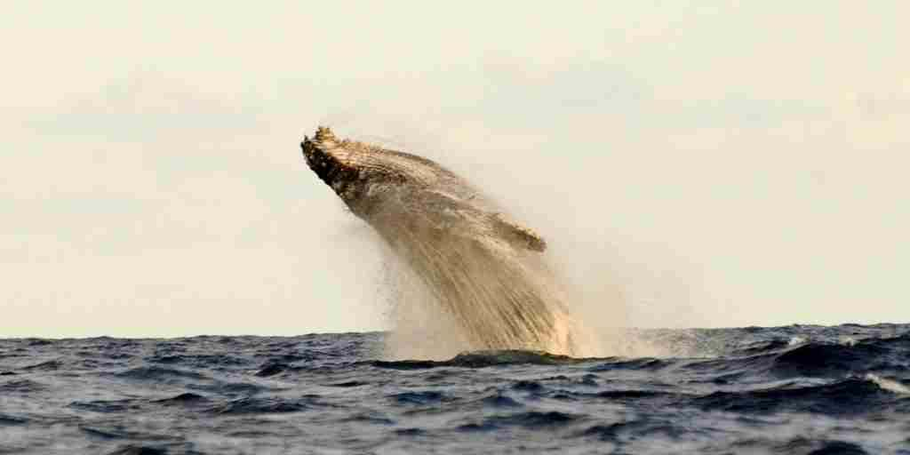 5 Activities - Whalewatching 1.jpg