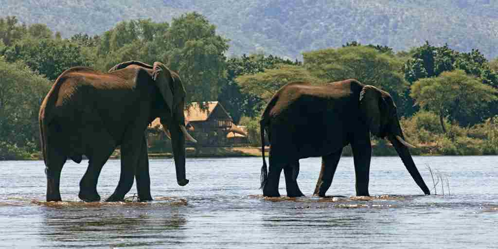 2 big eles in front of camp.jpg