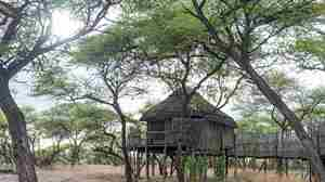 Onguma Tree Top_0511.jpg