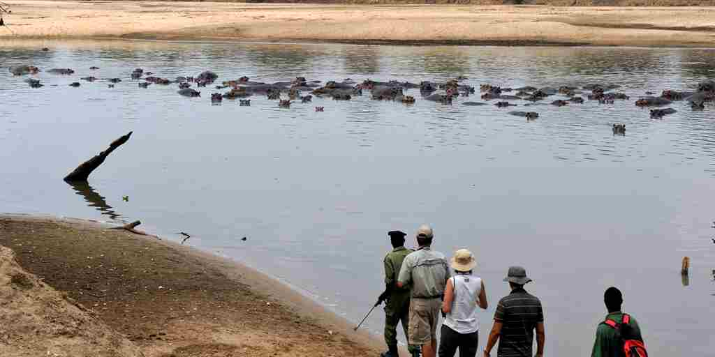 RAS - MWALESHI - WALKING IN THE LUANGWA RIVER.jpg