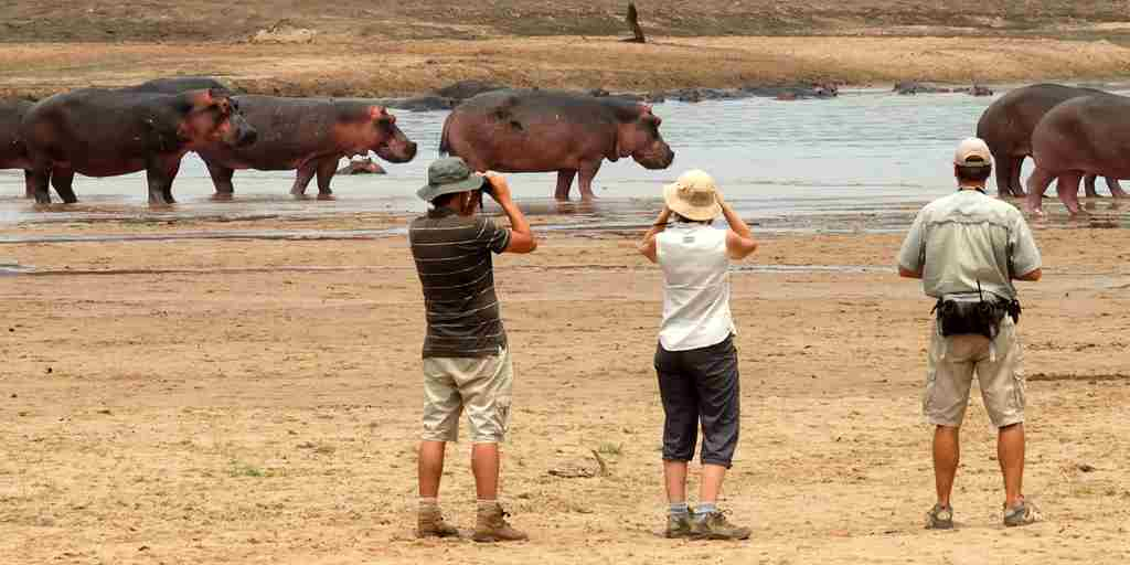 RAS - WALKING WITH HIPPO.jpg
