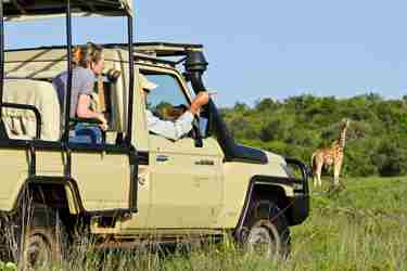 Game drive giraffe small