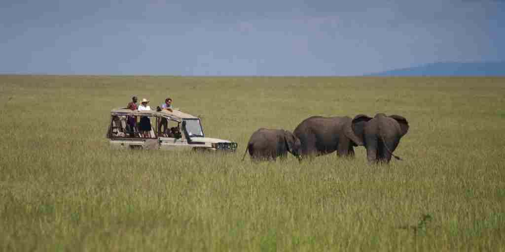 Car & Elephants Colour.jpg