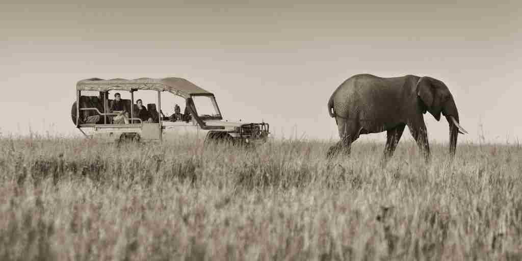Elephant on Game Drive B&W.jpg
