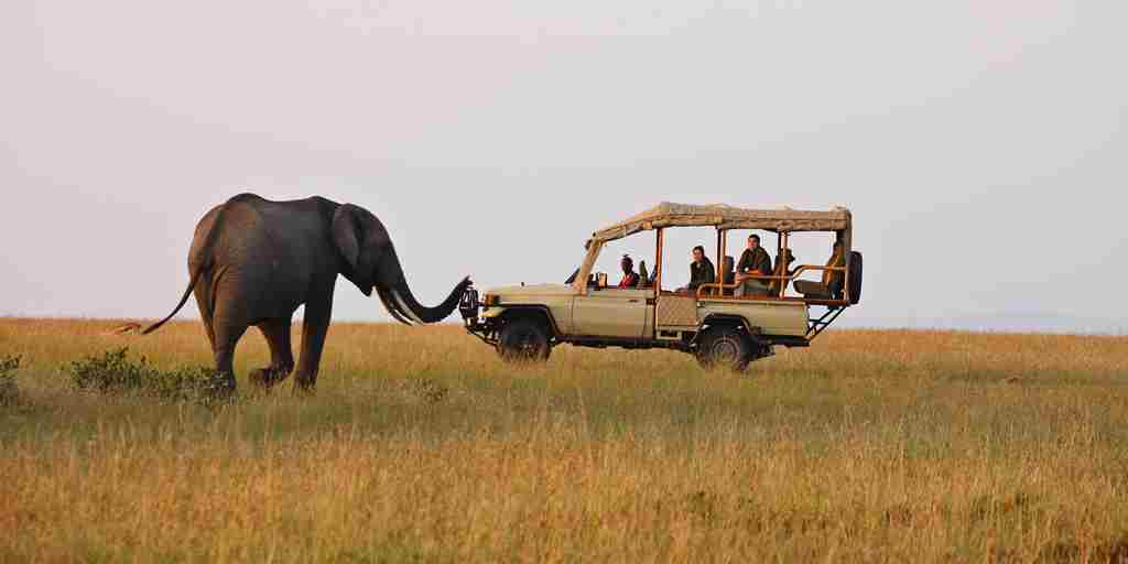 Elephant on Game Drive.jpg
