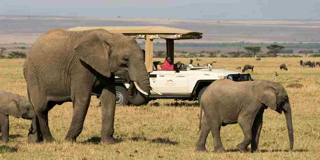 mahali-mzuri-game-vehicle-elephants.jpg