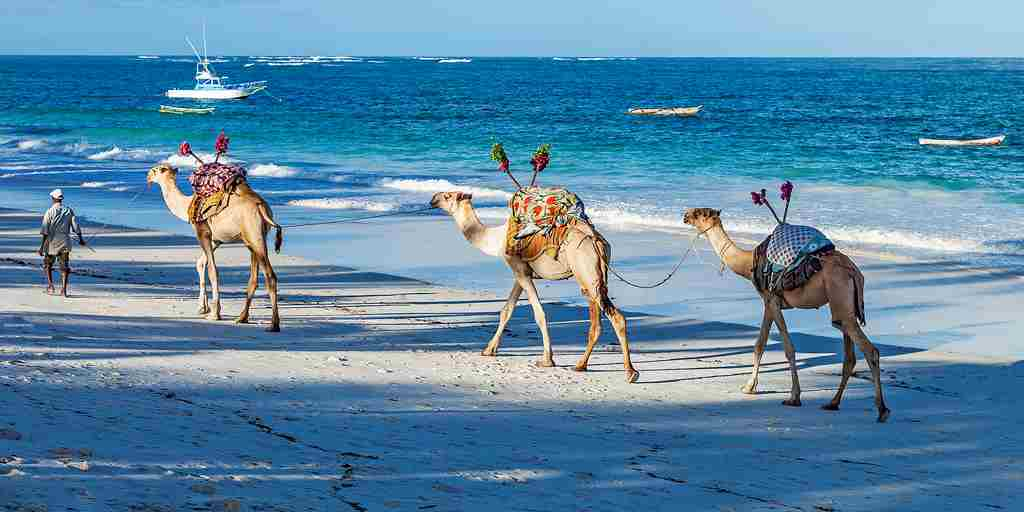 camels on the beach.jpg