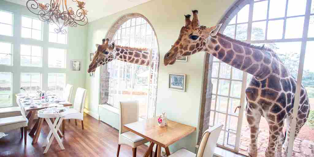 giraffe-manor-dining-room-kenya-yellow-zebra-safaris.jpg