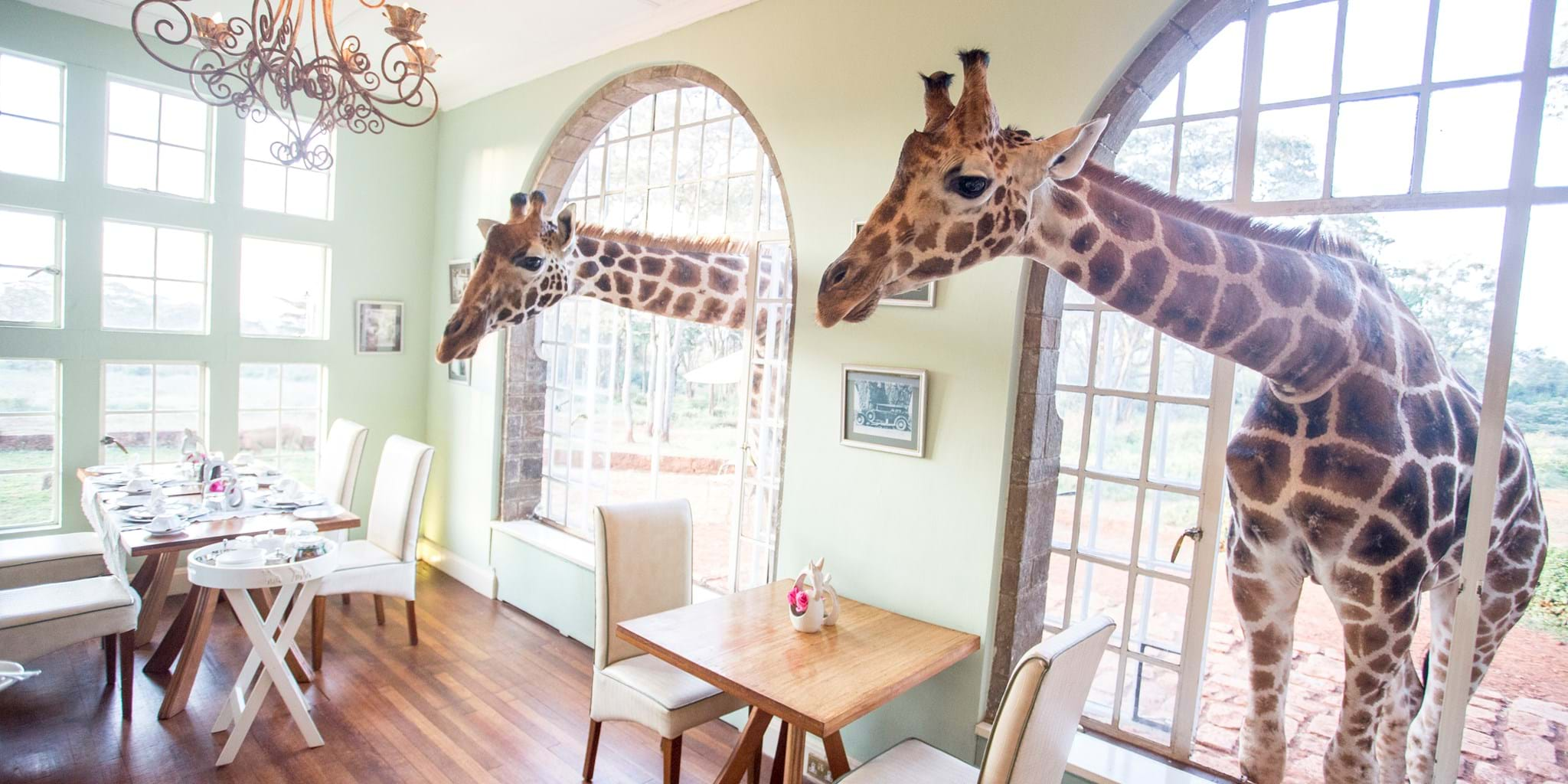 Image result for giraffe manor