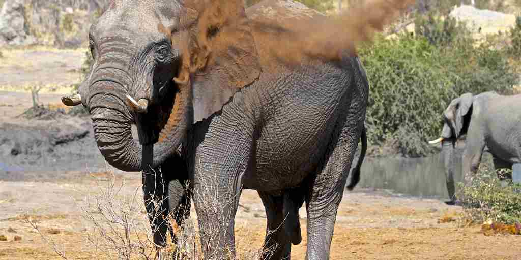 29. Imvelo Safari Lodges   Bomani Tented Lodge   Elephant dust bathing at Mpisini Pan