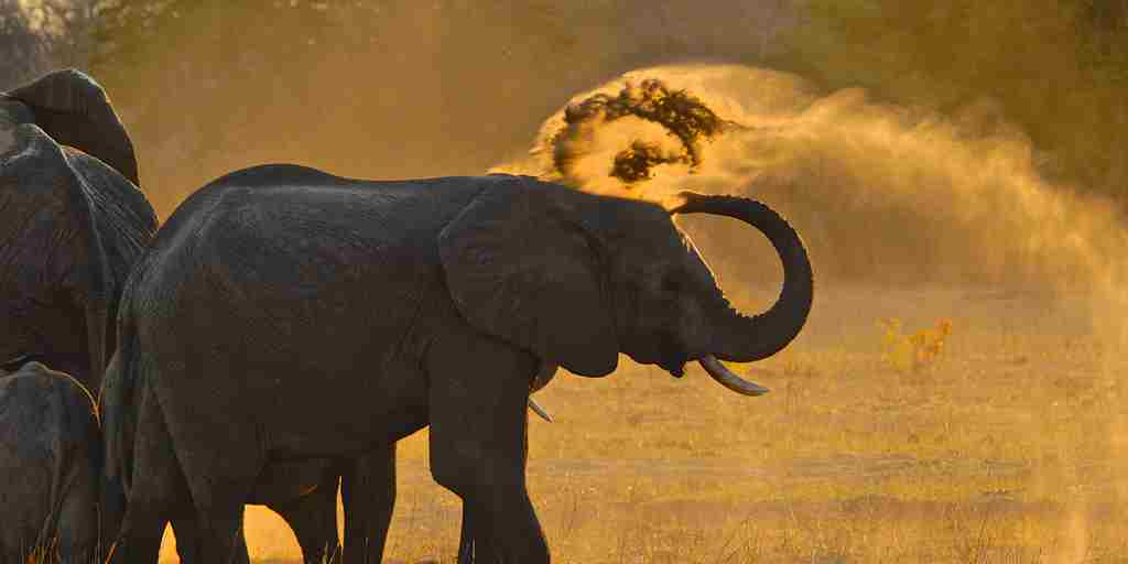 37. Imvelo Safari Lodges - Bomani Tented Lodge - Dust bathing at Stoffie's Pan.JPG