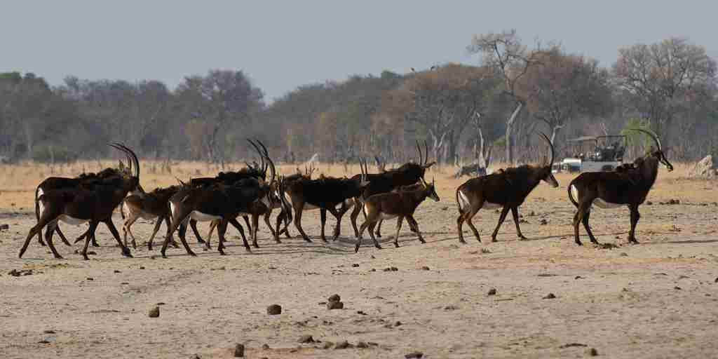 MM_Hwange_Sep2012_014.jpg