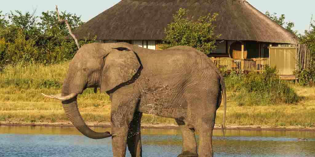 17. Imvelo Safari Lodges   Nehimba   camp waterhole is a favorite with the elephant