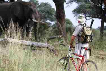 3---experimenting-with-mountain-bikes-on-elephant-paths-in-southern-hwange.jpg