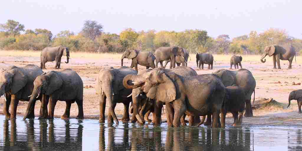 10---large-elephant-herds-in-the-south-of-the-park.jpg