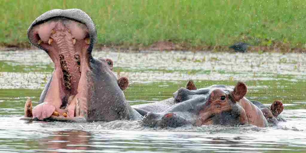Activities - Boating with Hippo.jpg