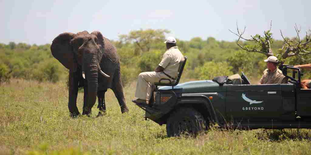 Ngala_Safari_gamedrive4.jpg