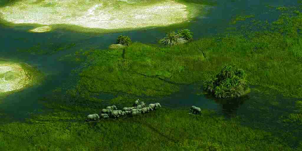 botswana-okavango-delta-elephants-yellow-zebra-safaris.jpg