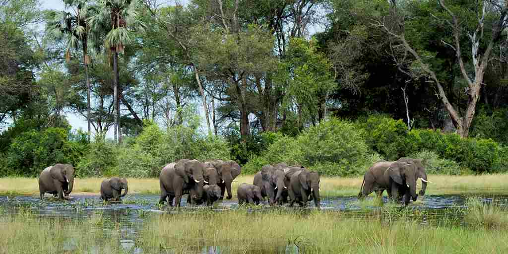 elephant-herd-water-botswana-yellow-zebra-safaris.jpg