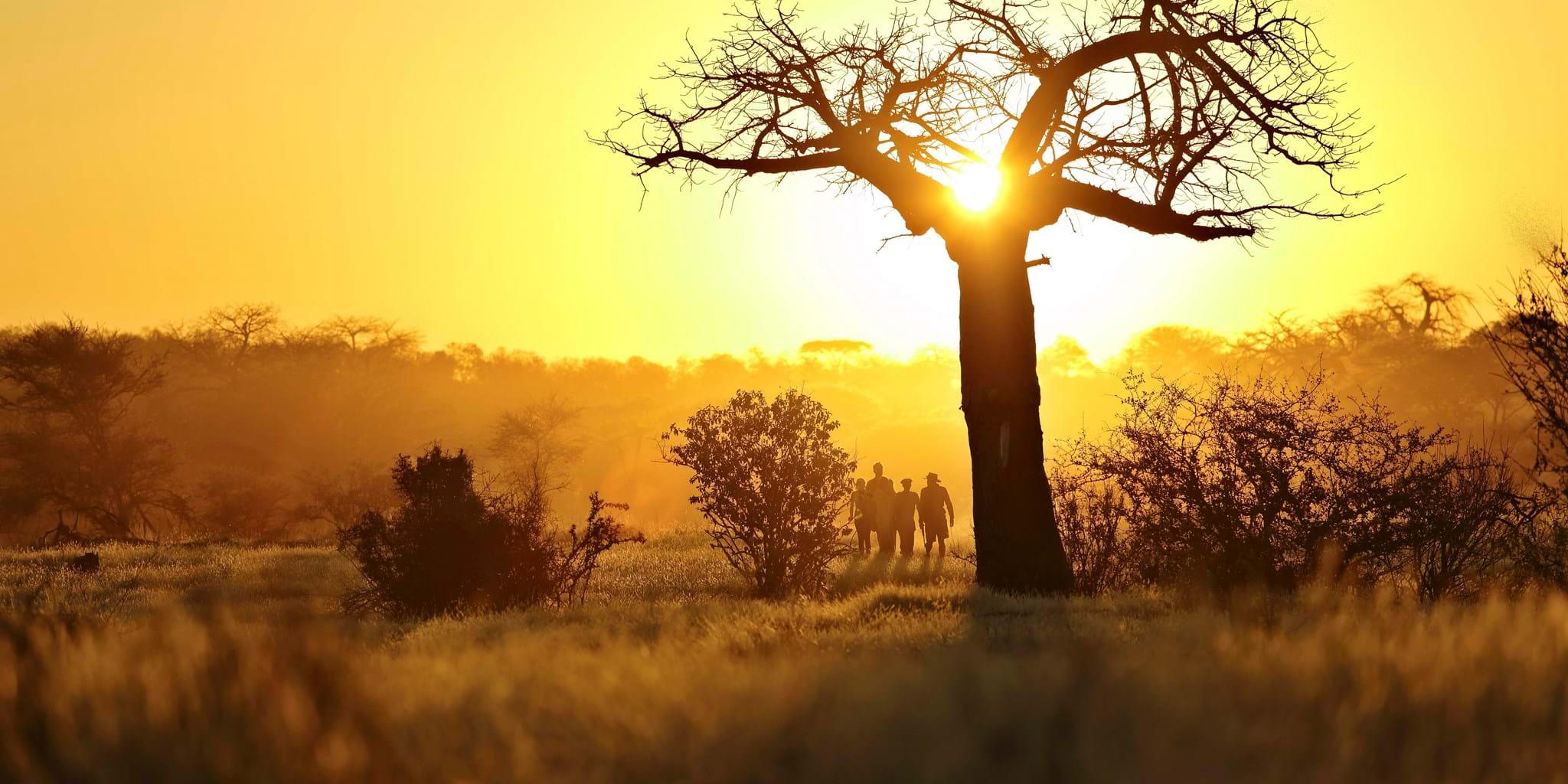 tanzania safaris luxury bespoke holidays yellow zebra safaris