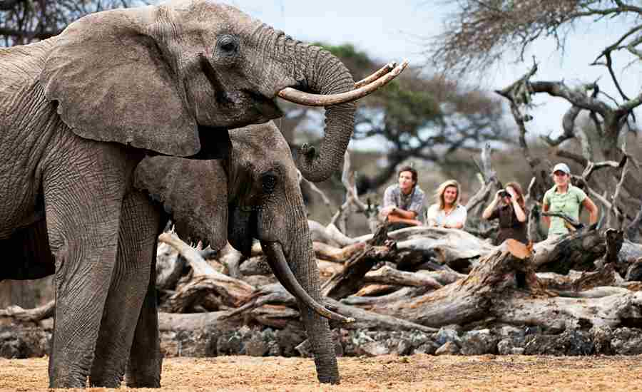_Copyright_Beverly_Joubert_OlDonyo_Safari_Kenya_5576.jpg