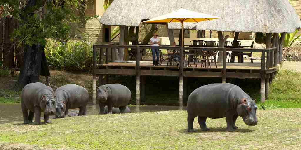 Arathusa-lodge-hippos-waterhole.jpg