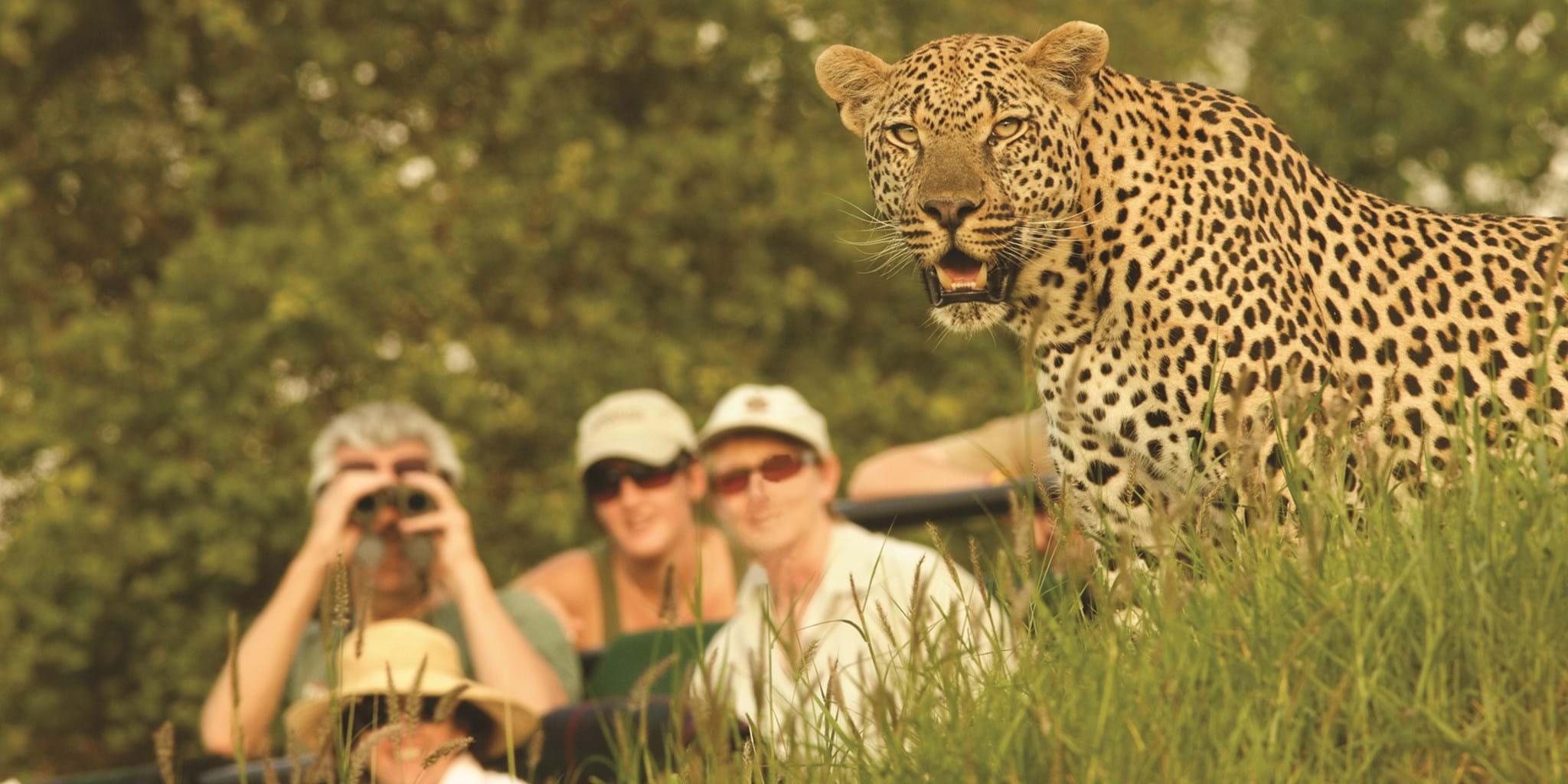 Best Africa Safari Destinations to Visit | Yellow Zebra Safaris