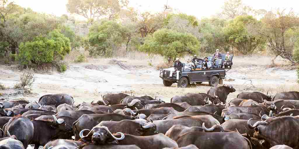 makanyi-lodge-buffalo-game-drive-yellow-zebra-safaris.jpg