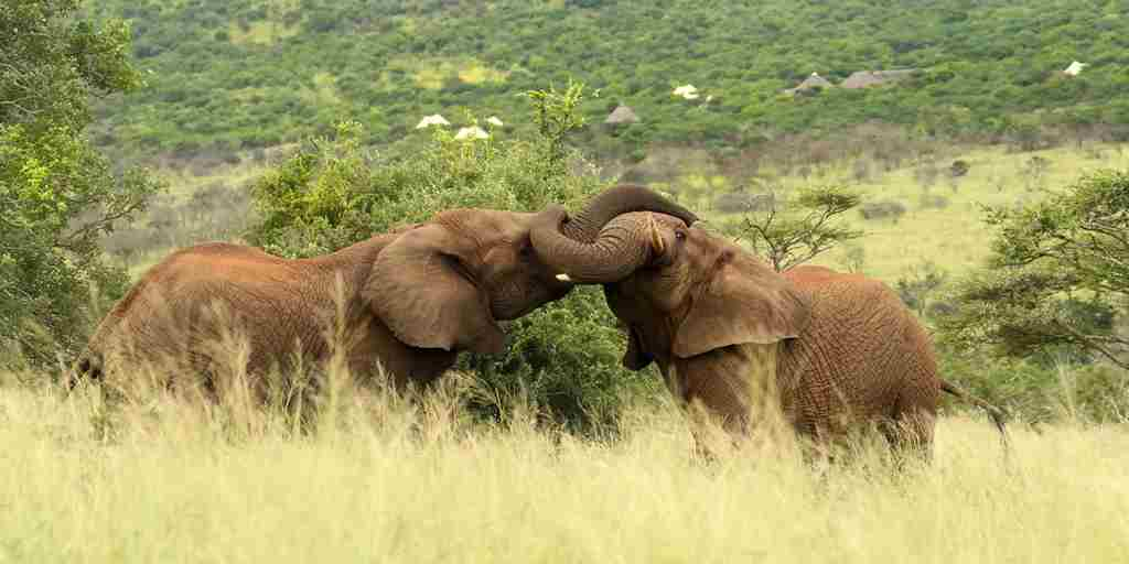 TTC043 - Tented Camp with Elephants - Photo by Christian Sperka.jpg