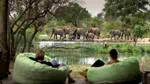 TANDA TULA SAFARI CAMP viewing deck elephants yellow zebra safaris