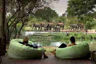 TANDA-TULA-SAFARI-CAMP-viewing-deck-elephants-yellow-zebra-safaris.jpg