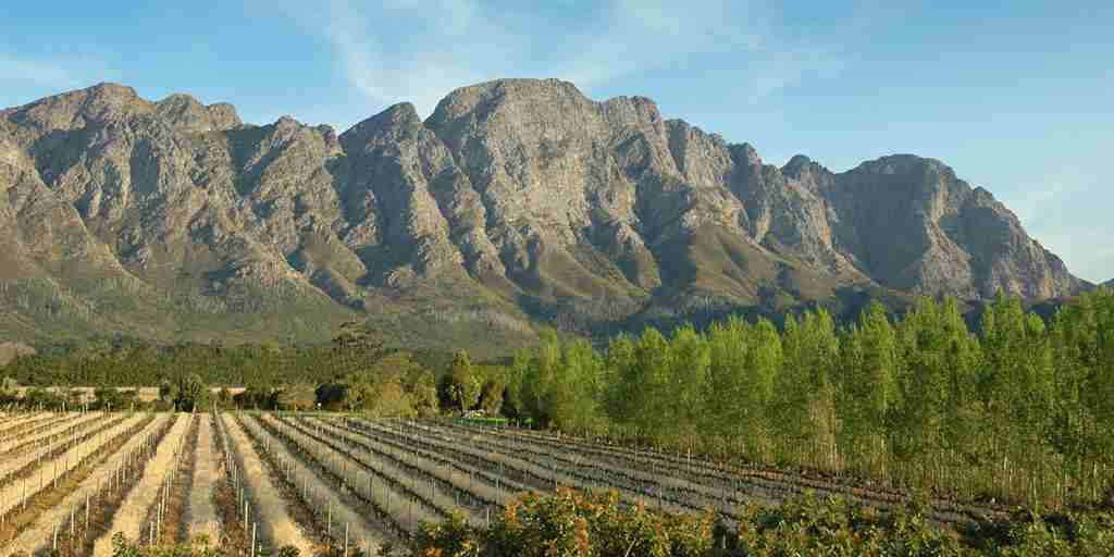 Franschhoek Vineyards (2).jpg