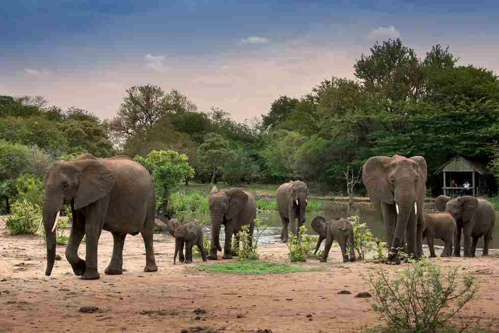 13. TANDA TULA SAFARI CAMP WATERHOLE.jpg