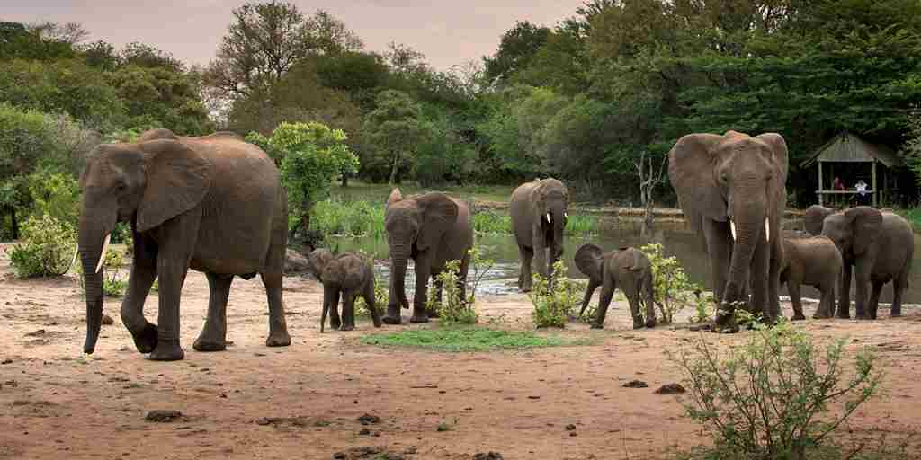 13. TANDA TULA SAFARI CAMP WATERHOLE