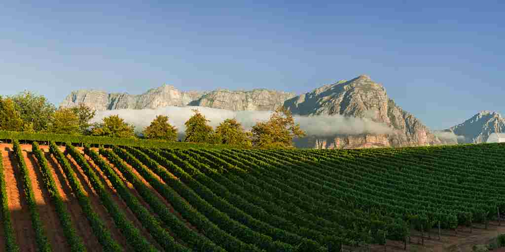 Views onto the Klein Drakenstein and Chardonnay Vineyards.jpg