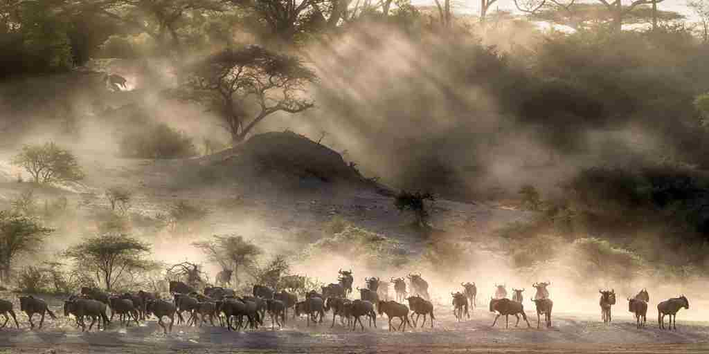 Great-migration-wildebeest.jpg