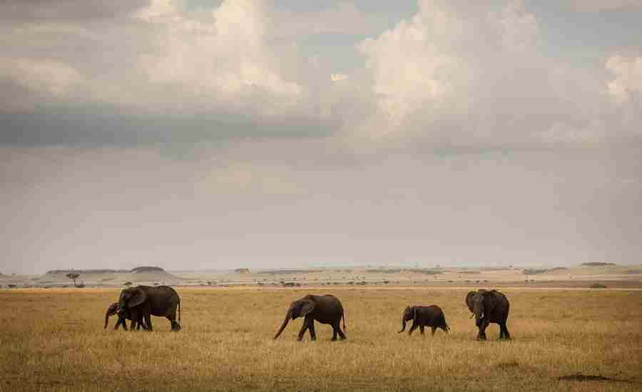 Kimondo-Camp-Game-Drive-Elephant-Herd-Eliza-Deacon-HR.jpg