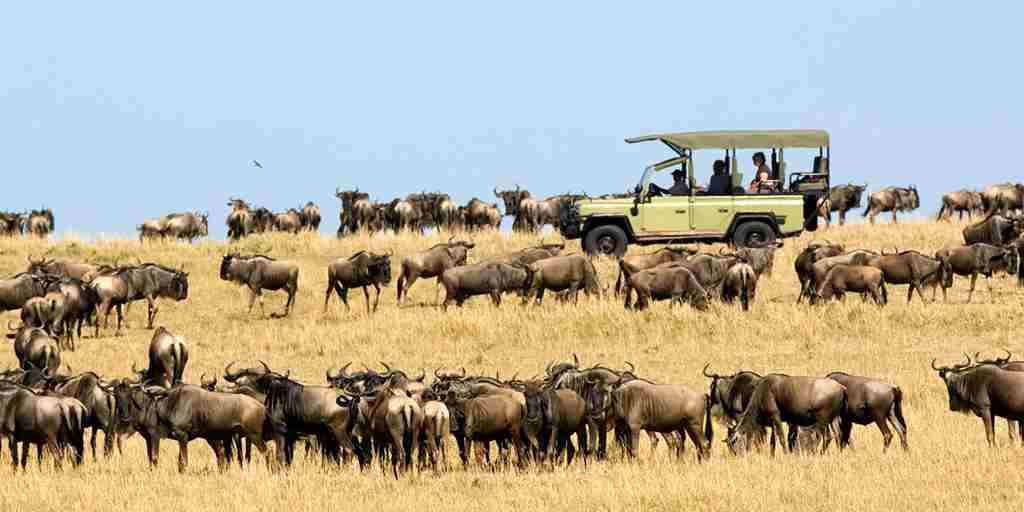 Wildebeest-migration-Dunia-Camp-game-drive-4.jpg