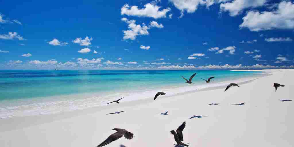 West Beach.ii - Bird Island.jpg