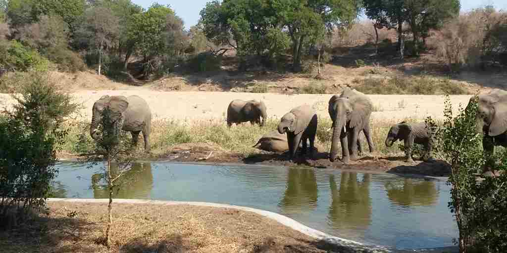 Simbavati River lodge New Waterhole elephants.jpg
