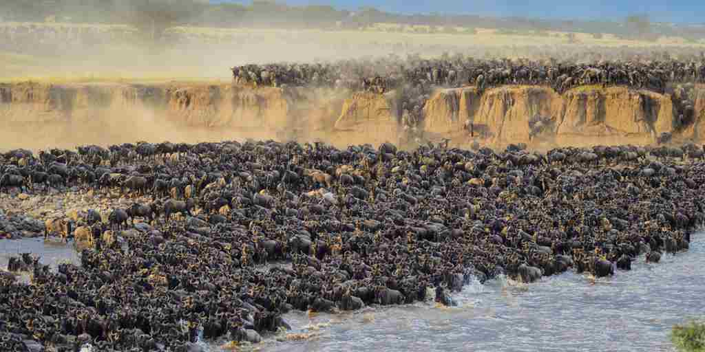 The  Great Migration Serengeti Tanzania