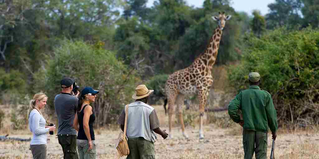 Walking safari with giraffe.jpg
