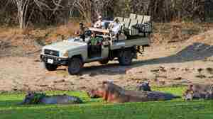 Game drive with hippo.jpg