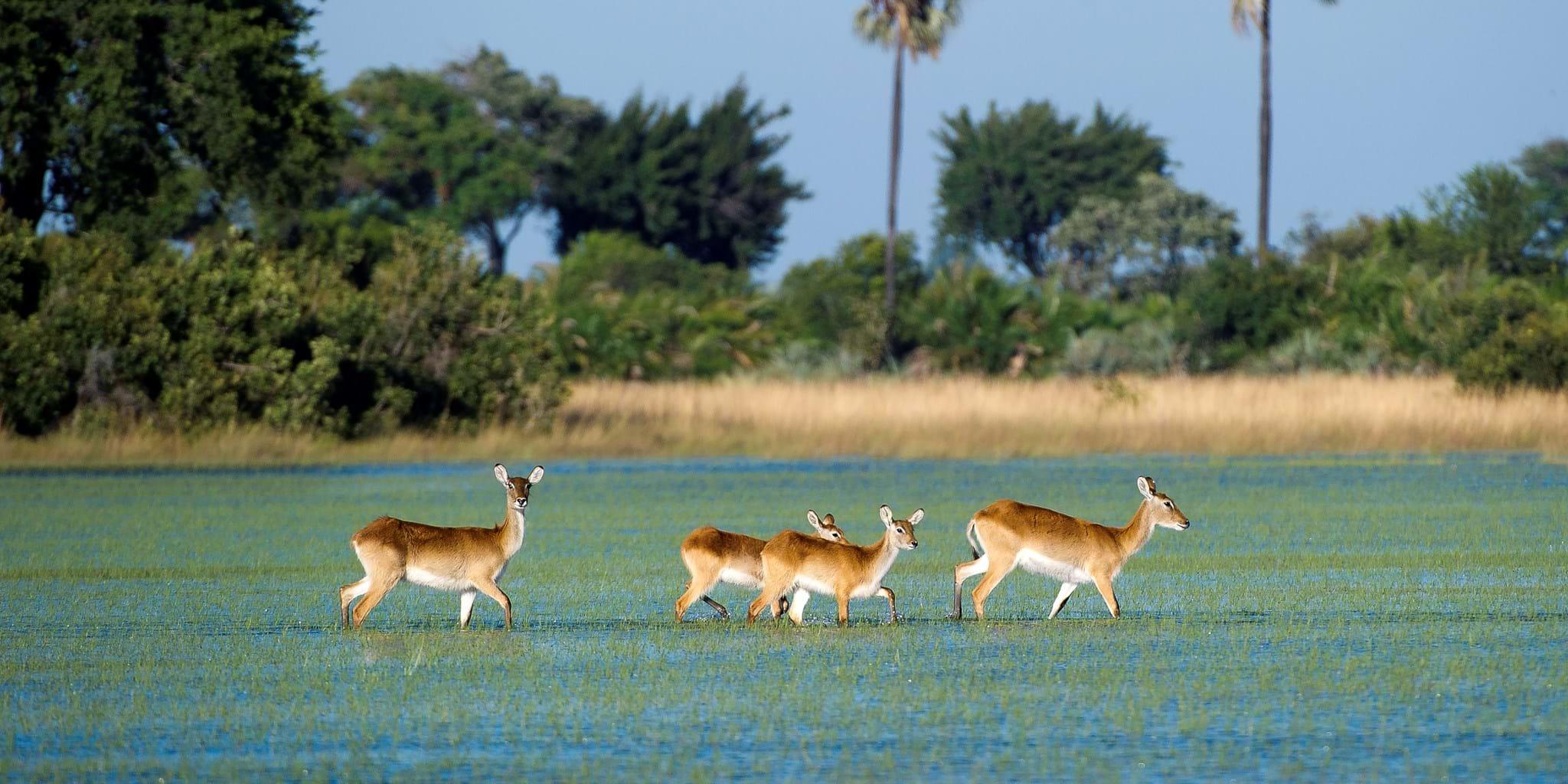 Botswana Family Safari (8n) – Value | Yellow Zebra Safaris