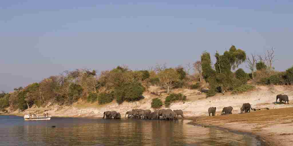 Chobe National Park Botswana (9)