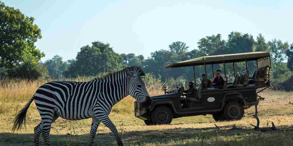 The Bushcamp Company - Game drives in the South Luangwa.jpg