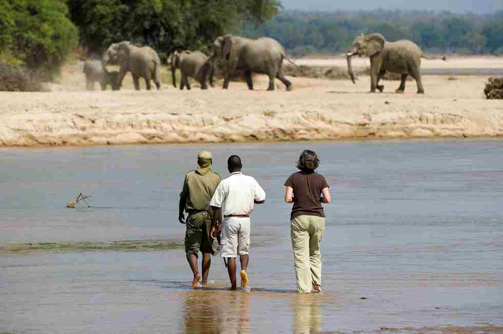 THE BUSHCAMP COMPANY - many elephants to see.jpg