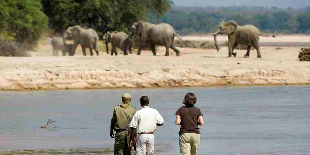 THE BUSHCAMP COMPANY   many elephants to see